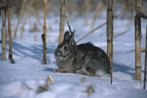 Как защитить молодые деревья от зайцев зимой