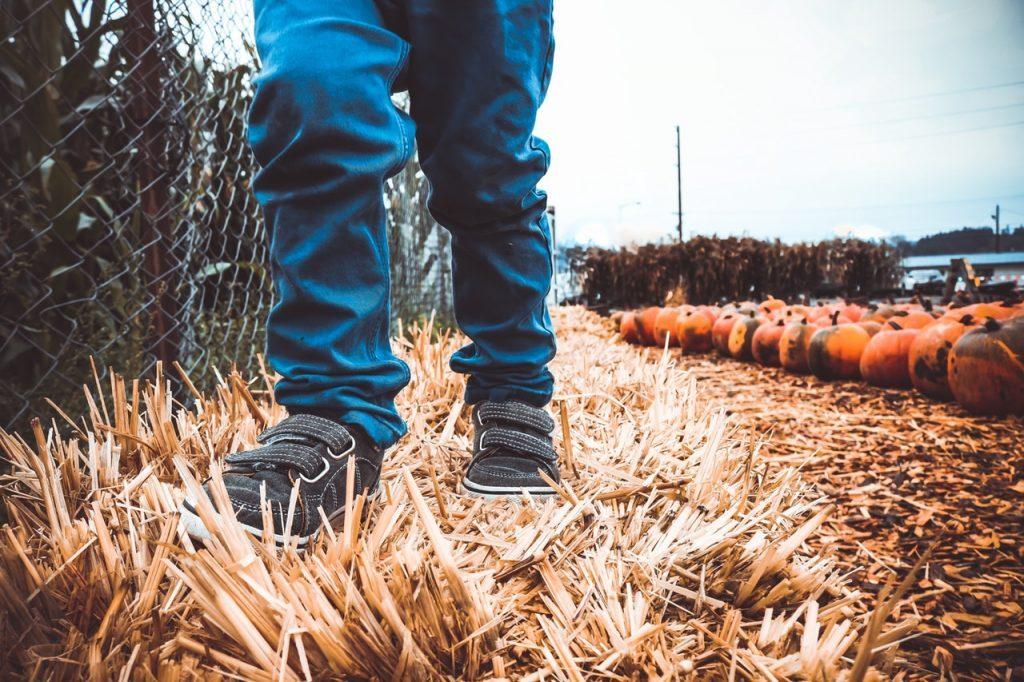 Осенняя борьба с вредителями почвы
