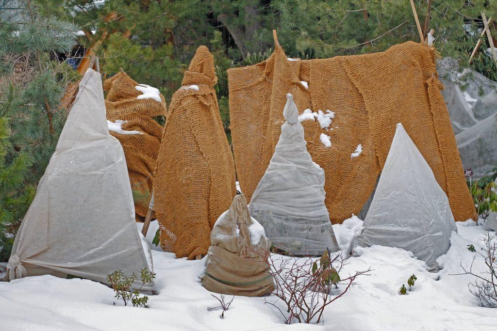 укрытие роз на зиму в подмосковье