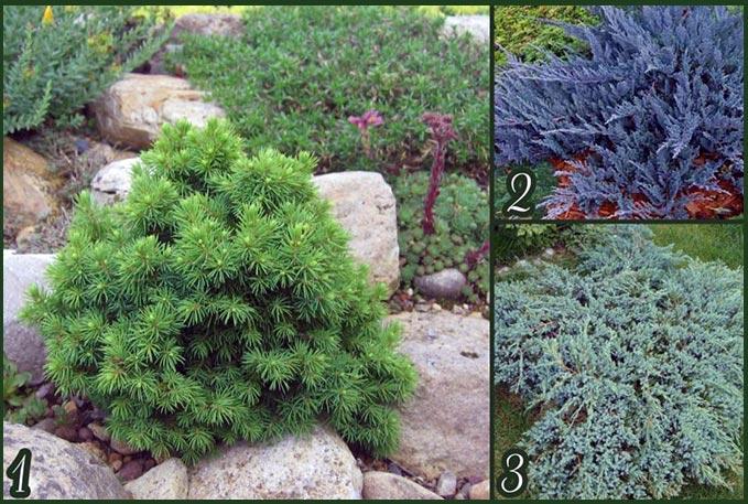 Альпийская горка растения фото