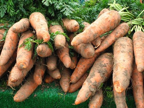 Как хранить морковь на зиму в погребе