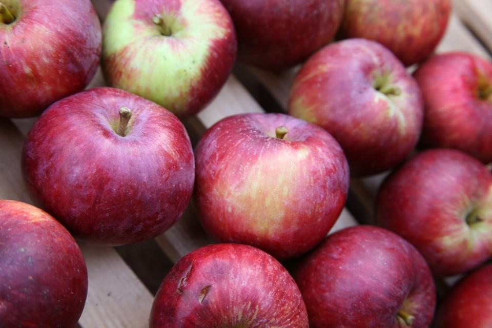 Как хранить яблоки в домашних условиях