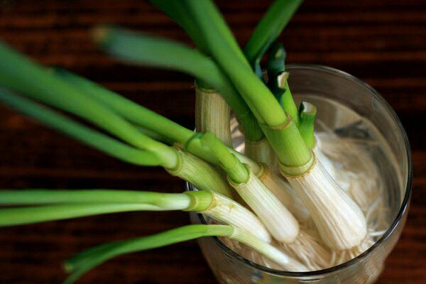 Как вырастить зеленый лук без земли