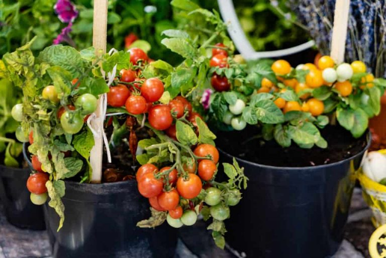 ютуб выращивание рассады томатов