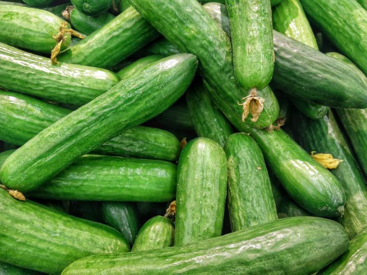 Через сколько дней начинают плодоносить огурцы в теплице