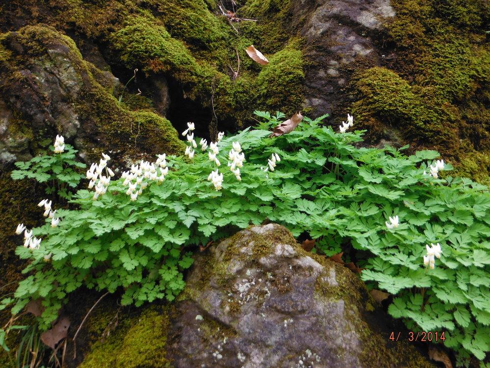 Какие цветы посадить на альпийской горке