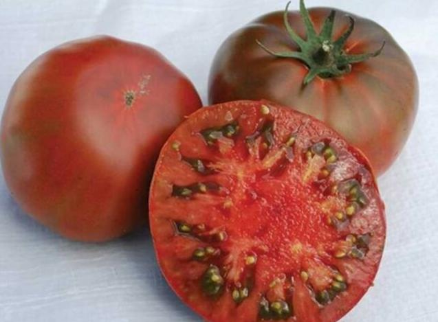 помидоры сорт ляна фото