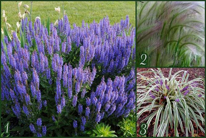 Подходящие растения для альпийской горки