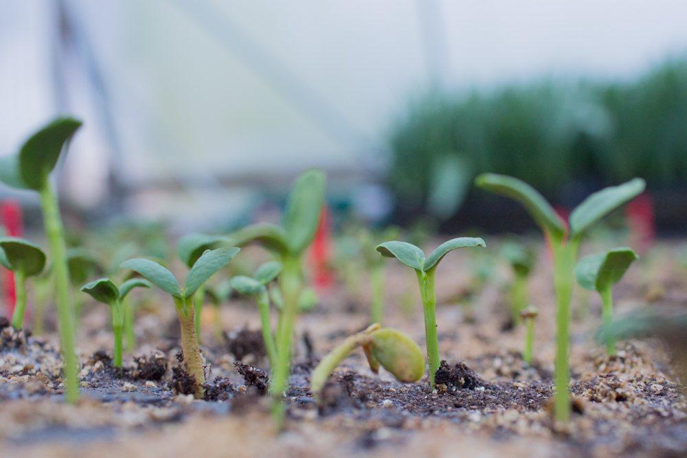 Какие цветы можно сажать рассадой в феврале