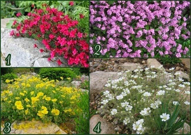 Цветы для альпийской горки многолетние название