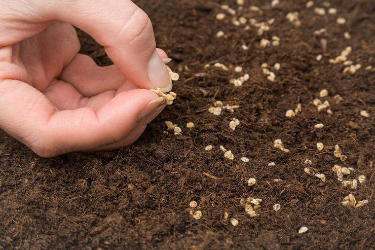 Подготовка семян томата к посеву на рассаду