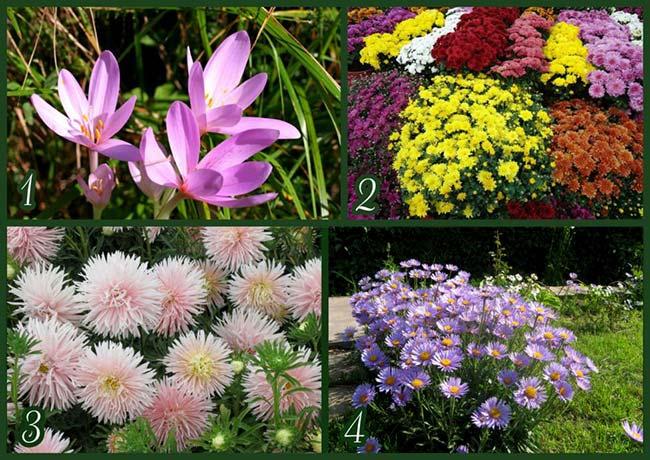 Альпийская горка цветы какие